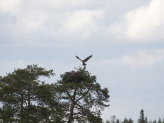 konnevesi national park, sightseeing and nature watching in Finland by LakelandGTE